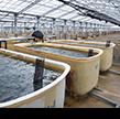 久米島海洋深層水開発海ぶどう養殖場