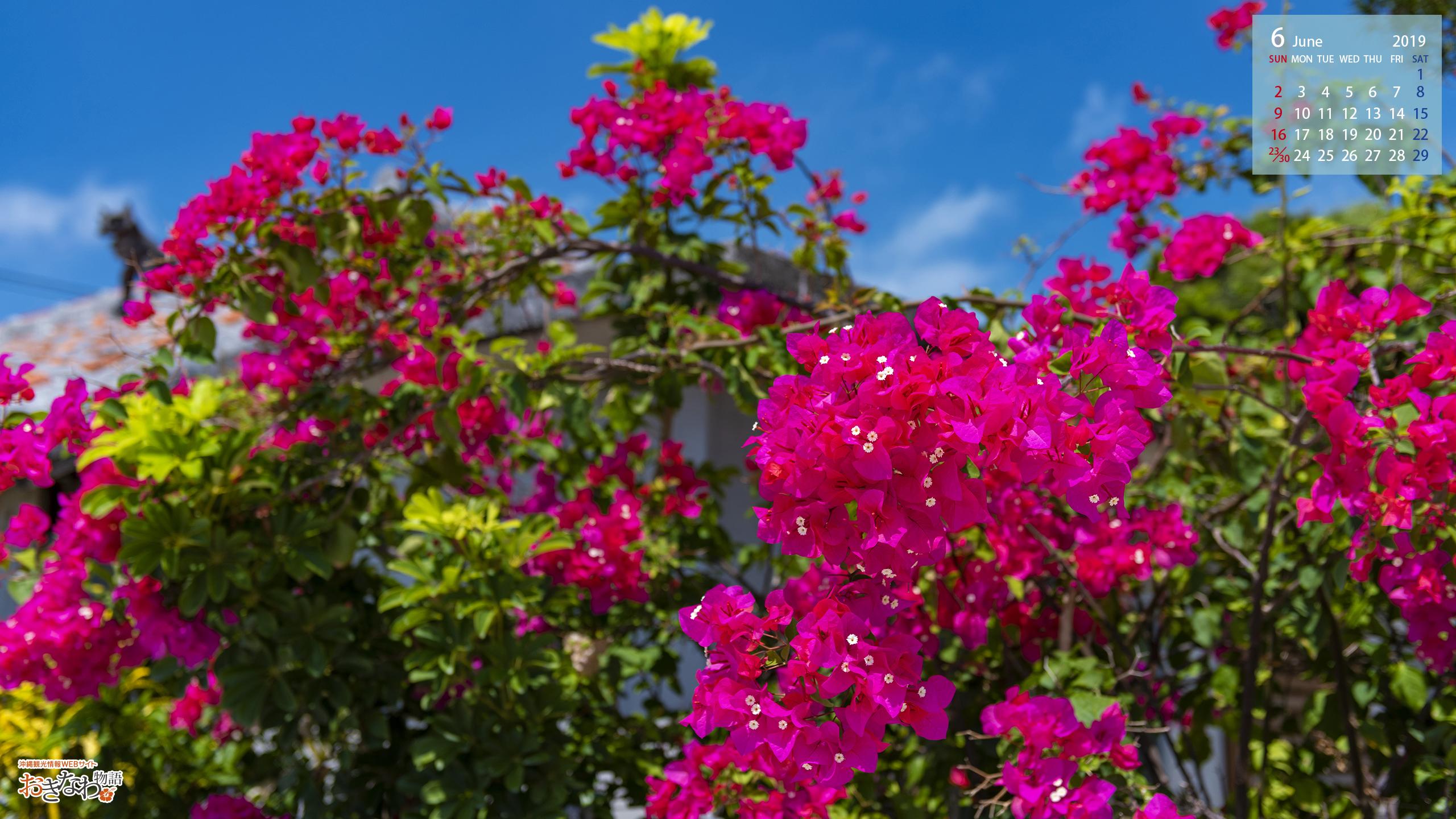 6月の壁紙カレンダー お知らせ トピックス 沖縄観光情報webサイト おきなわ物語
